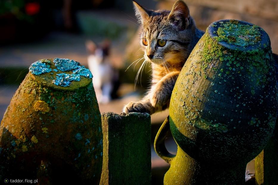Kocie igraszki