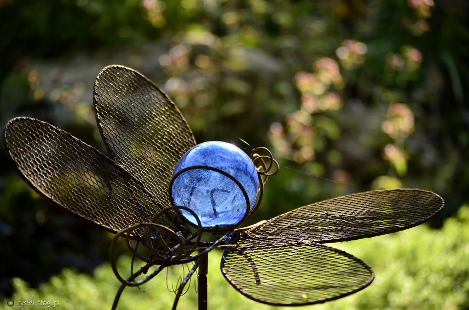 motyl na końcówkę lata ;)