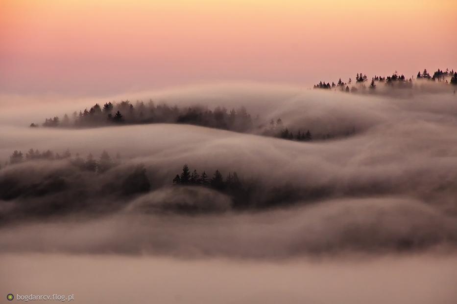 mgły...nad lasem