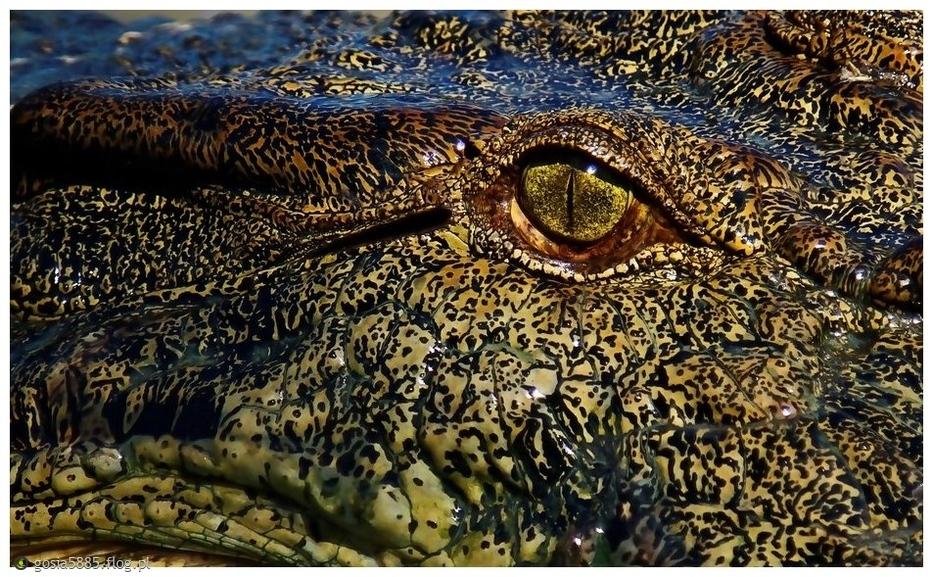 Oko krokodyla - pozdrawiam cieplutko i życzę super poniedziałku. :))))