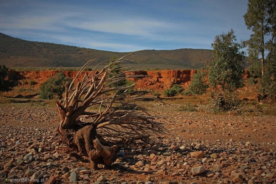 Góry Flindersa, Południowa Australia - pozdrawiam cieplutko i życzę super wtorku. :)))