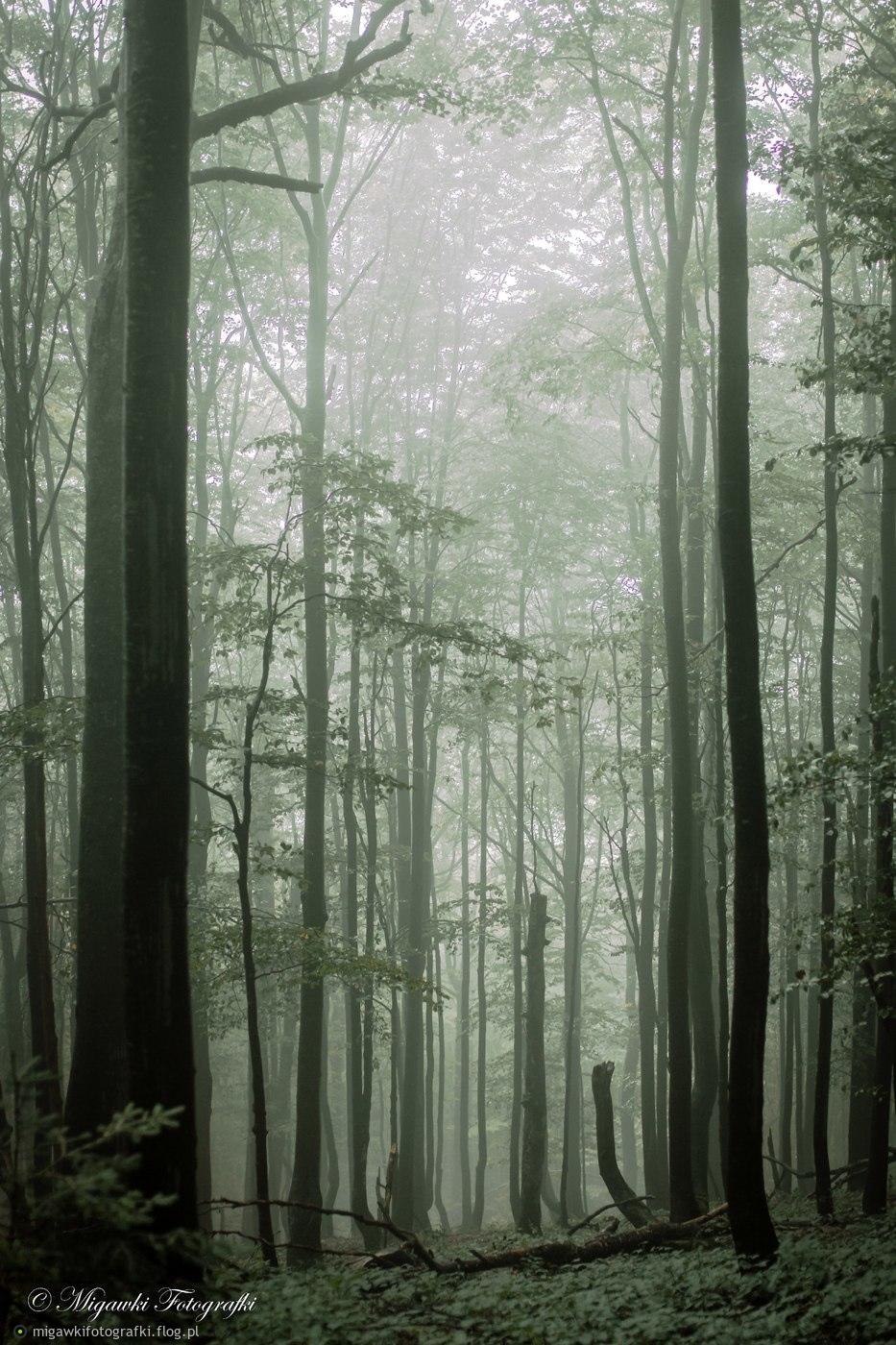 Las bieszczadzki