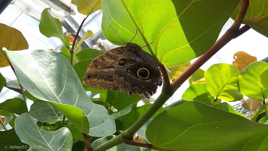 Szczęście jest jak motyl, czasem przeleci i zniknie w oddali,a czasem przysiądzie na chwilę,dając nadzieję na lepsze jutro.(cytat)