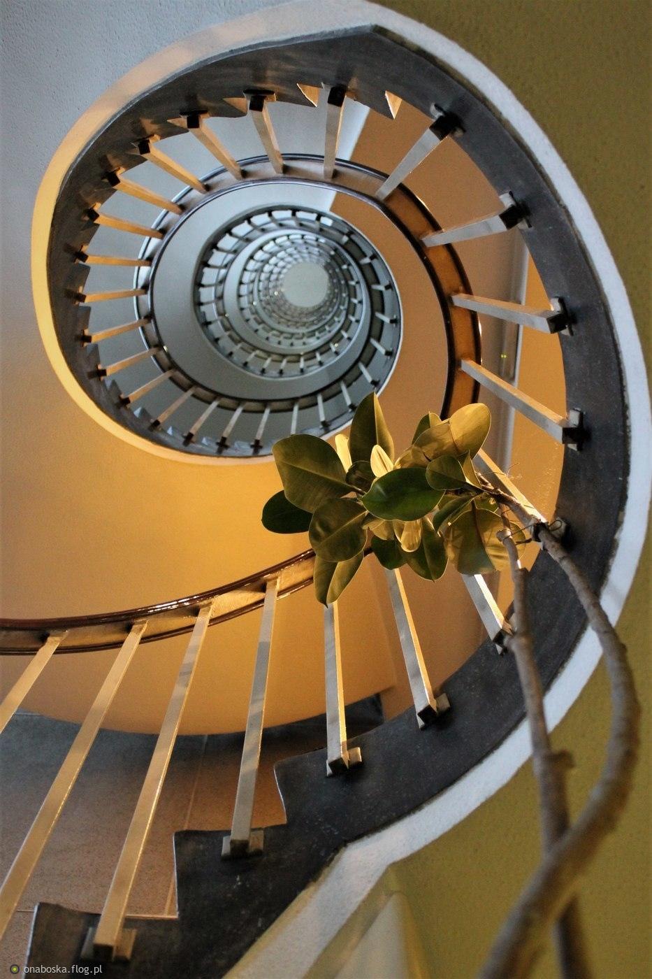 Głupota daje windę, mądrość tylko schody :)