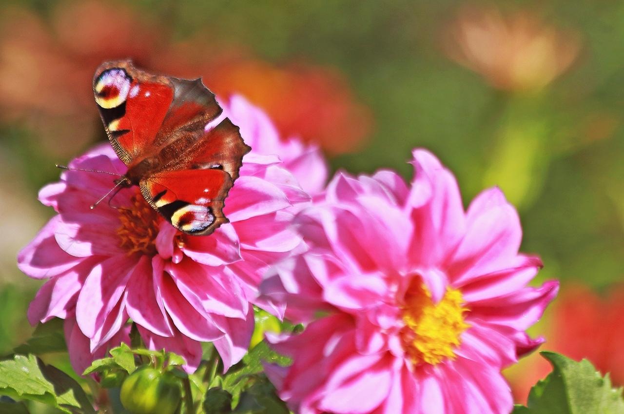 Świat motyli:)