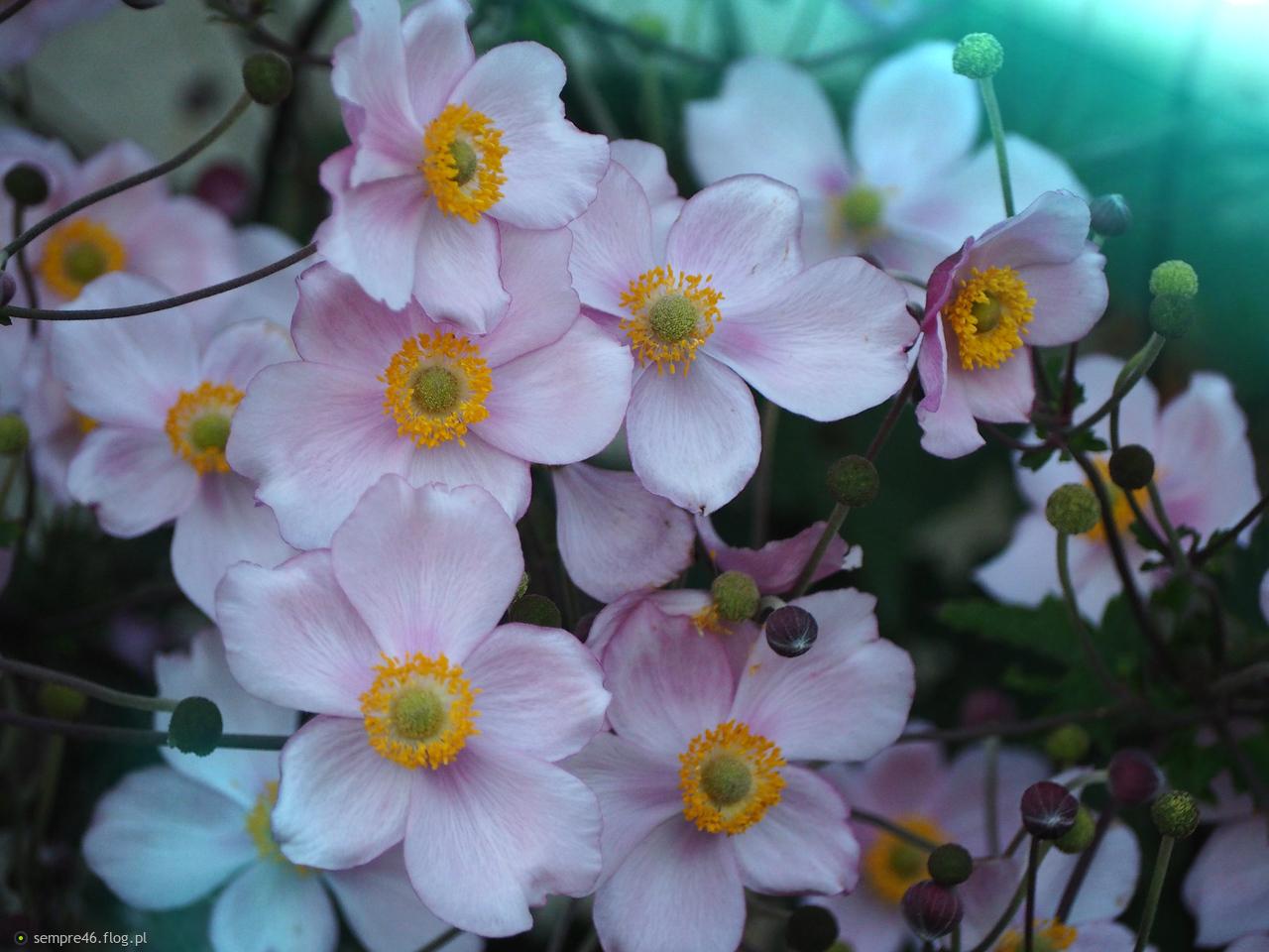 Jakie to kwiaty?