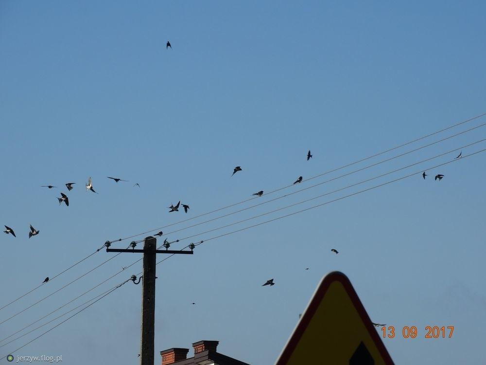 Wśród ptaków wielkie poruszenie