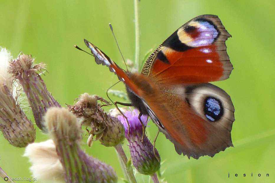 Motyl i jego gąsieniczka