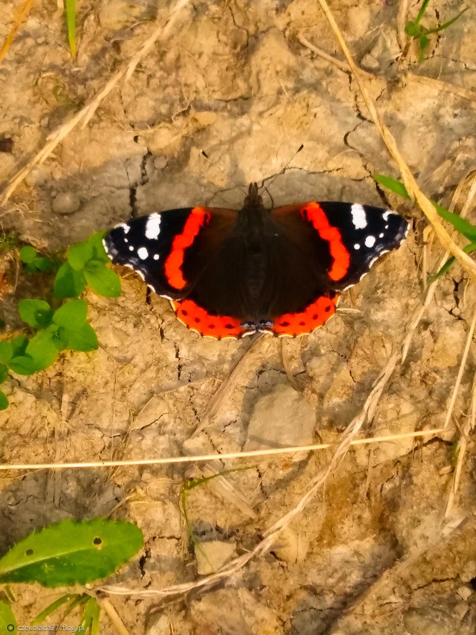 Miłość jest jak motyl ...choć piękna, to trudna do złapania ...  Im bardziej za nią gonimy, tym łatwiej nam ucieka ...