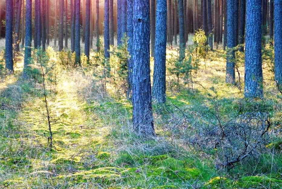 Poranek w lesie:)))pięknego dnia życzę:))
