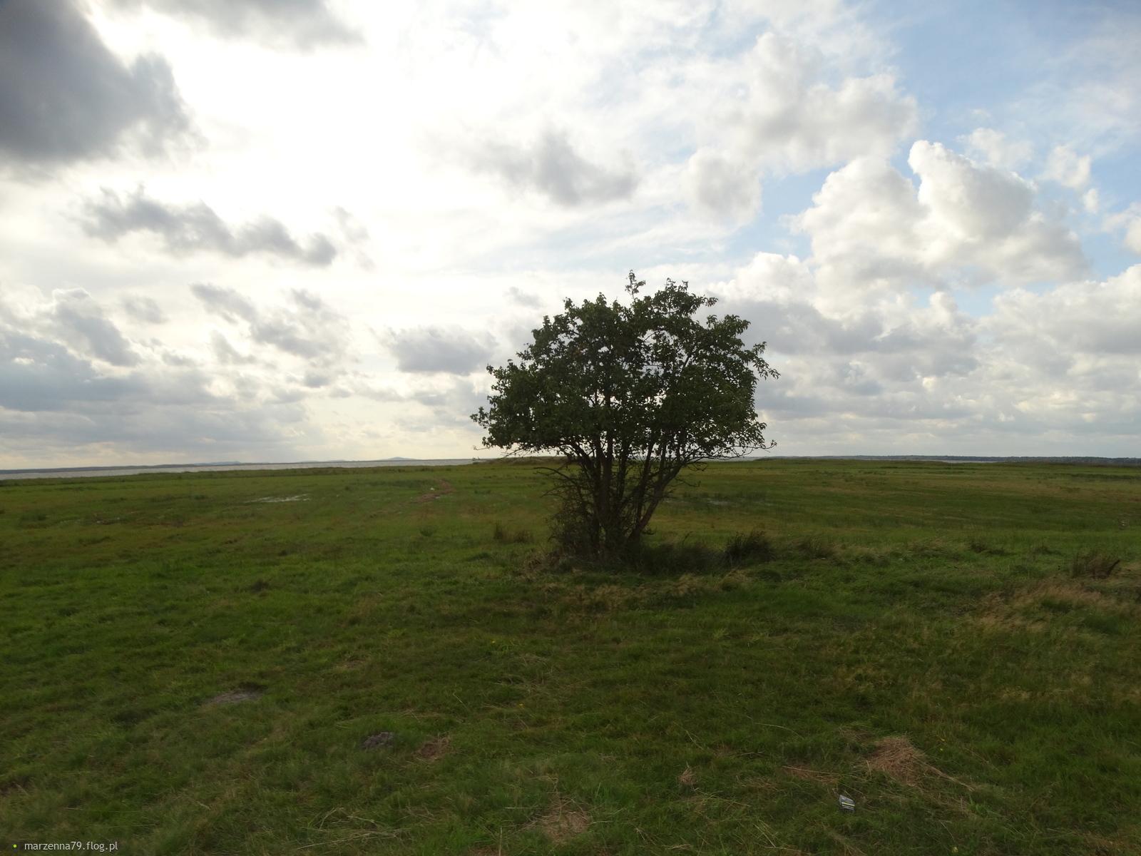 ŁEBA -  Spacerkiem przez pola i szuwary podczas wichury  ☸ ⛵