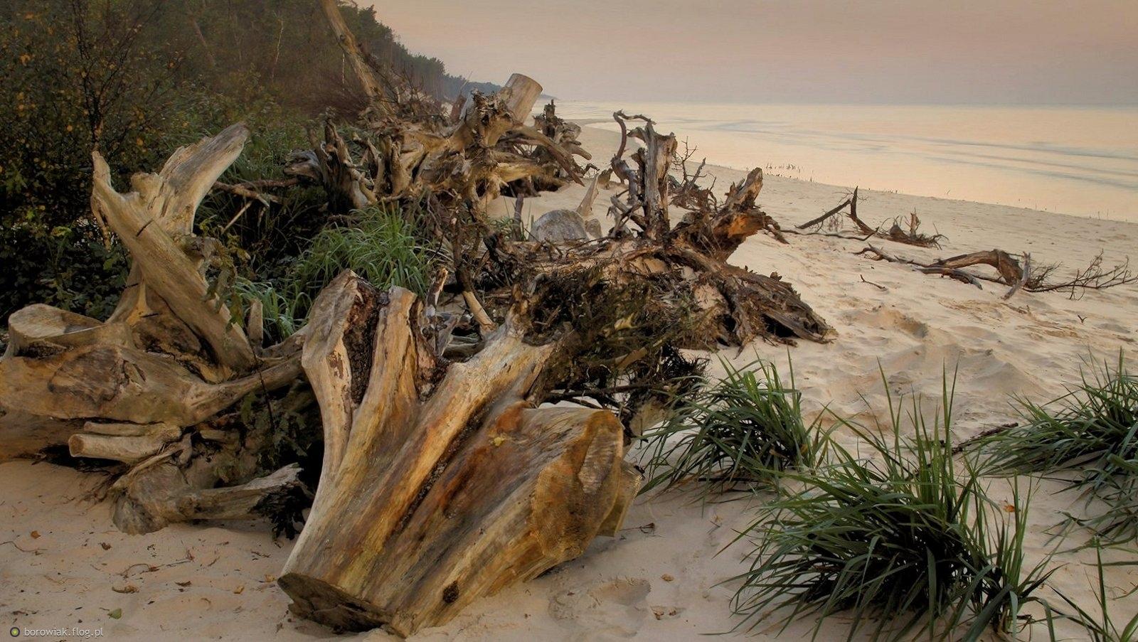 Jesienne i zimowe sztormy rozłożą je jak kocyki na plaży...