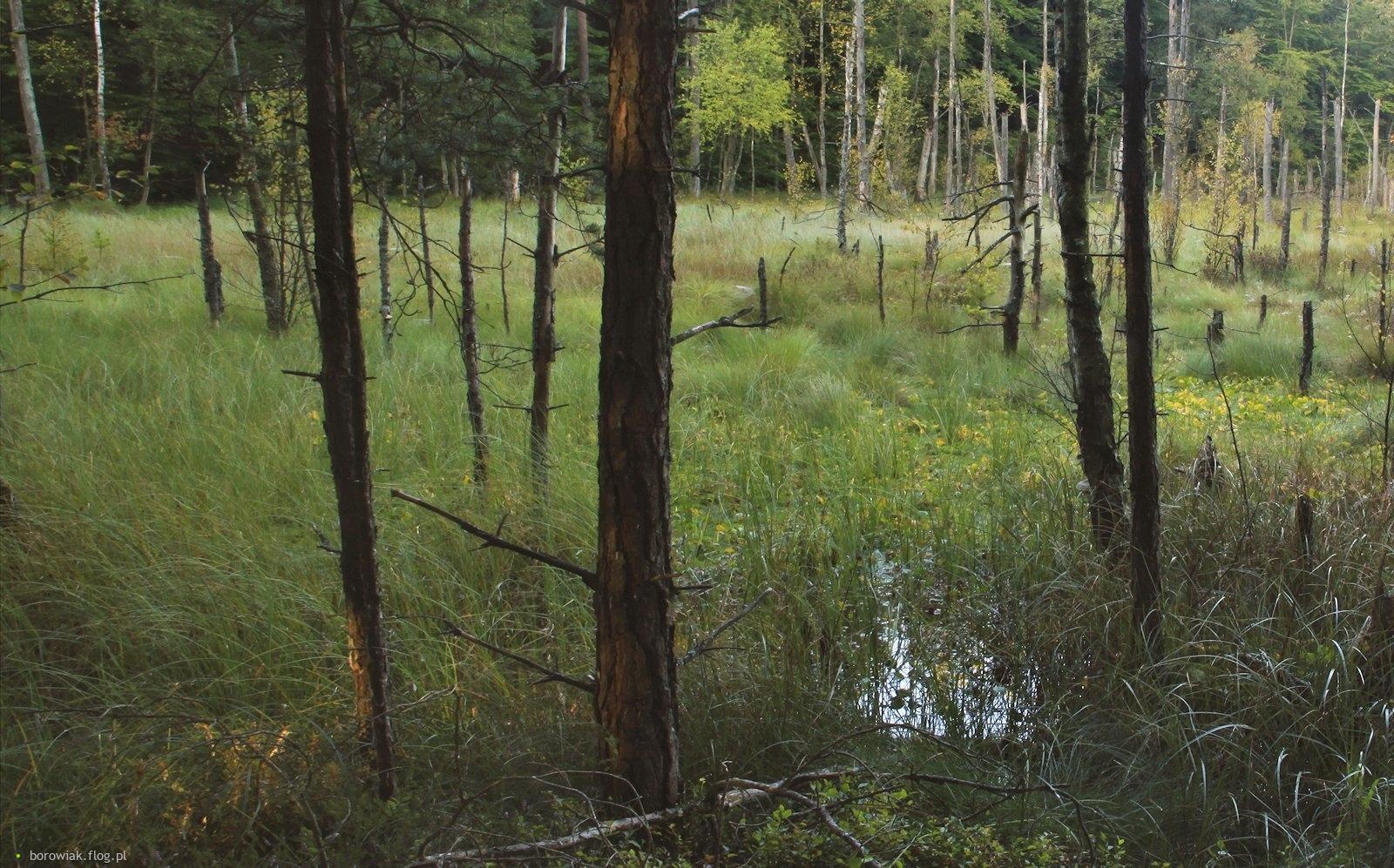 Ciągle pada, wody przybywa, drzewa się duszą...