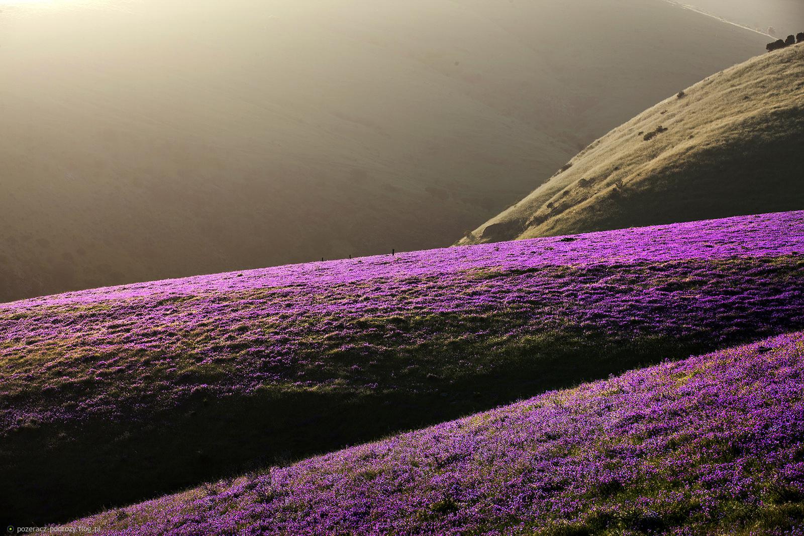 wiosenny krajobraz minimalny