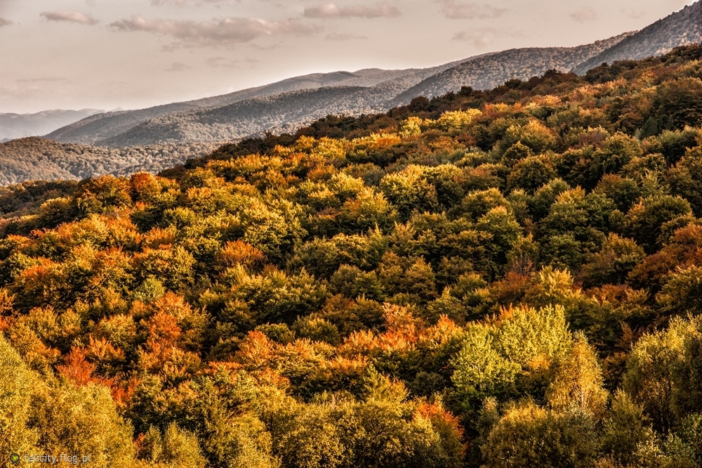 Jesień maluje...