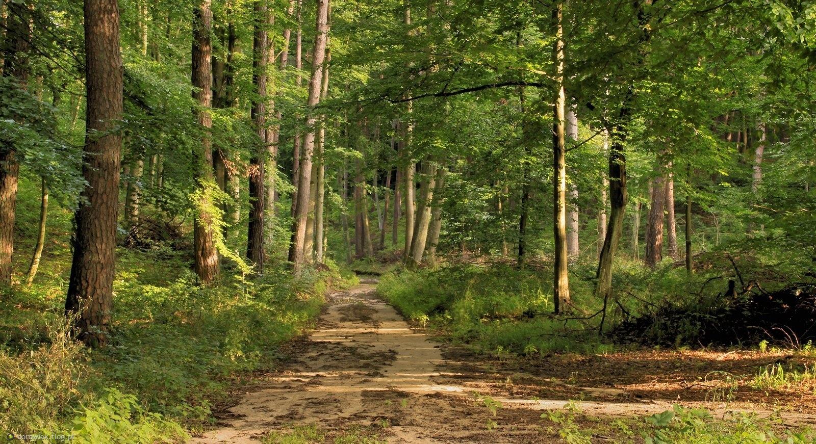 Chociaż mokro, chociaż woda spływa, czas w las...