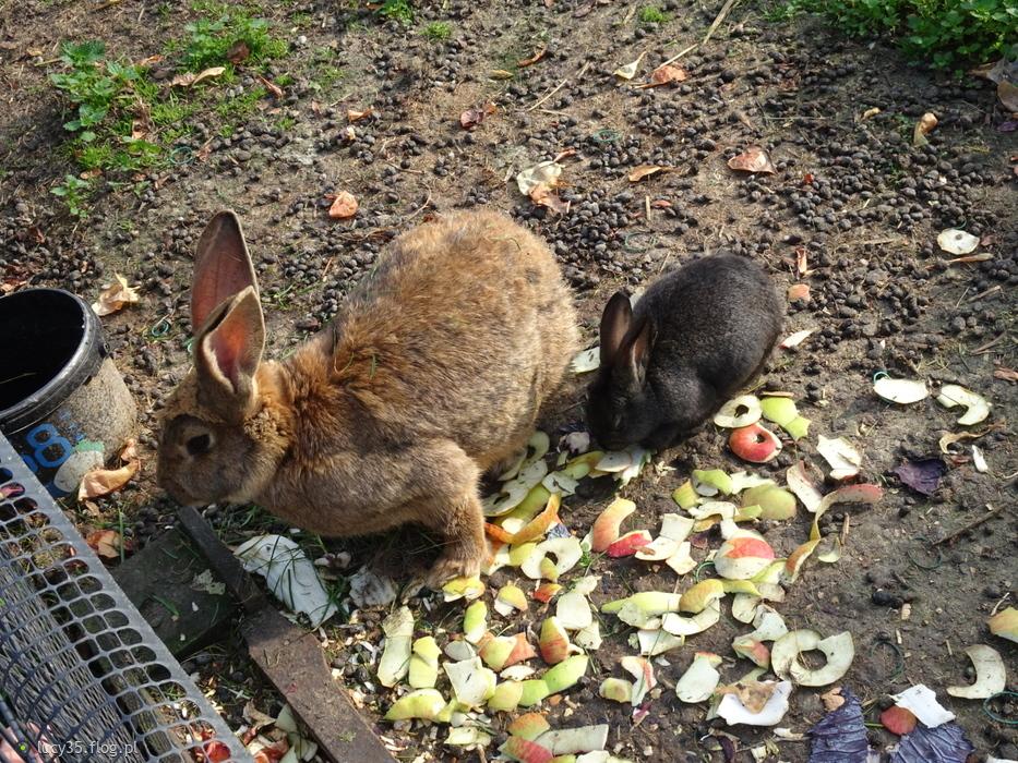 Wspomnienia uroczych królików