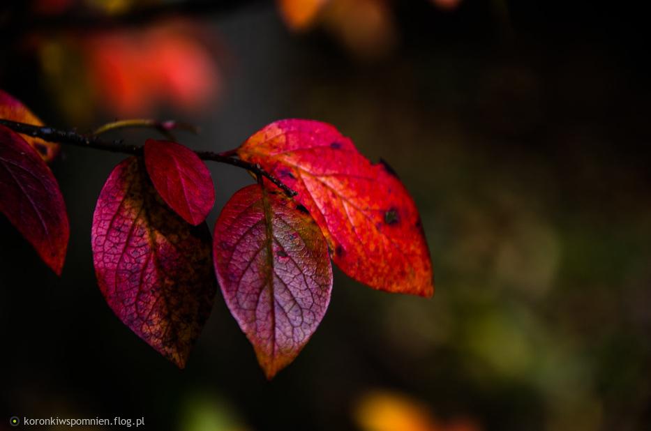 Jesień w parku dla Ciebie Andrzeju:)