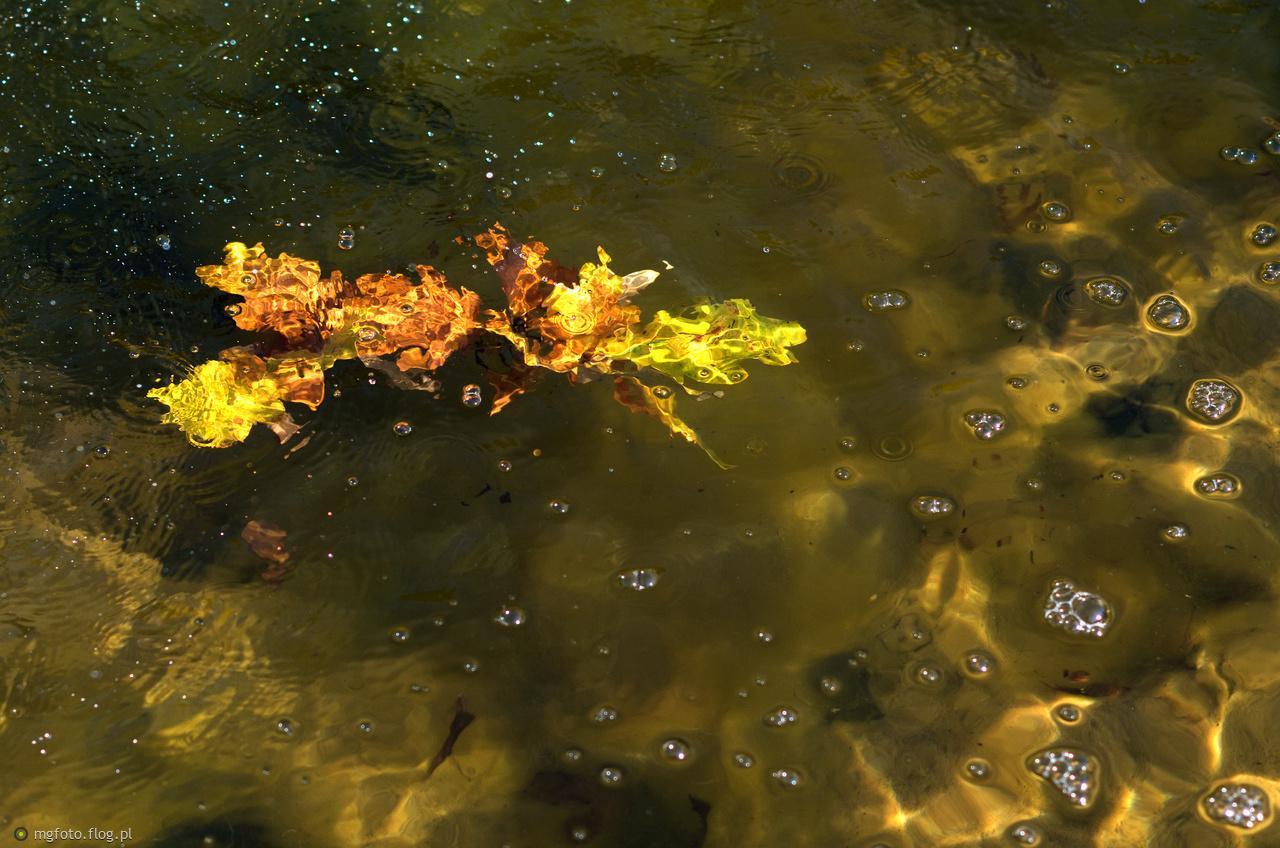 Pani Jesień liście strąca z drzew... :)