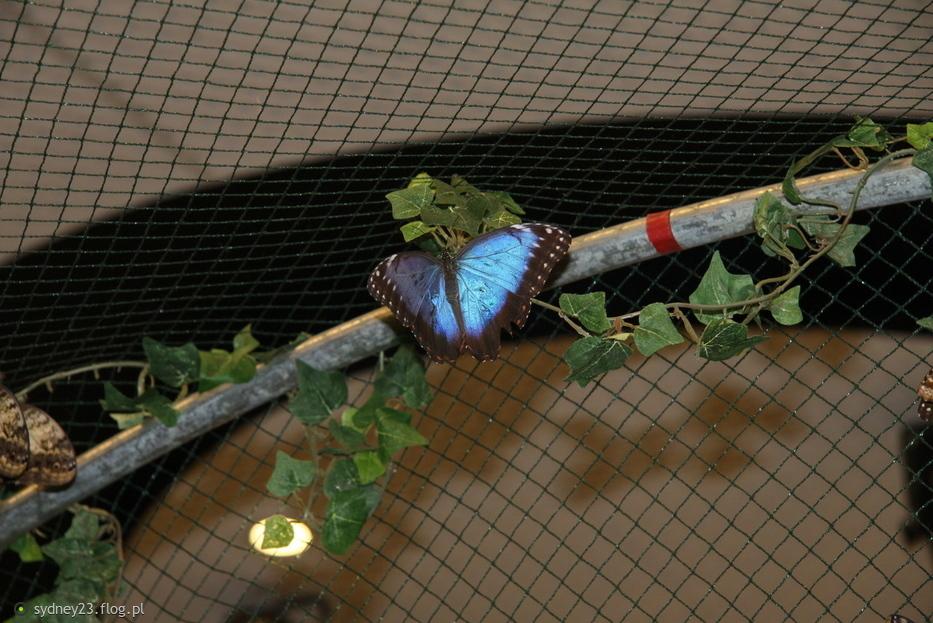 Motylarnia prawie jednego motyla