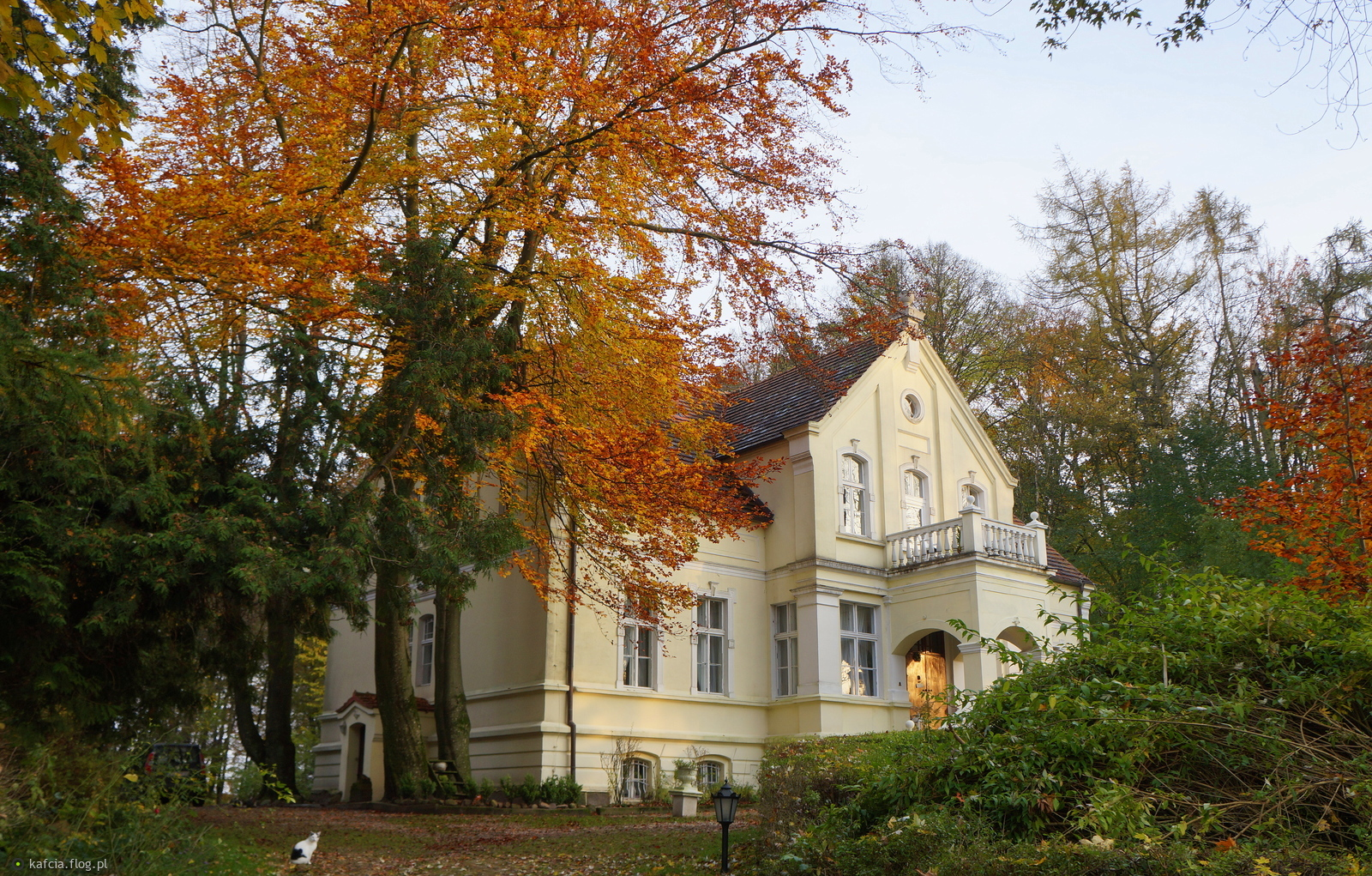 Narewka | Airbnb