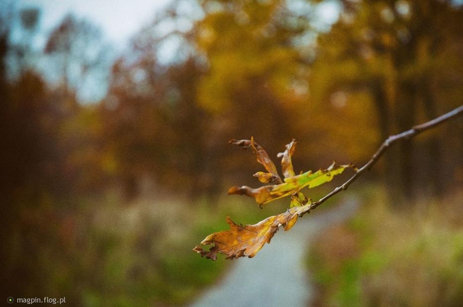 Znalezione obrazy dla zapytania żółty liść