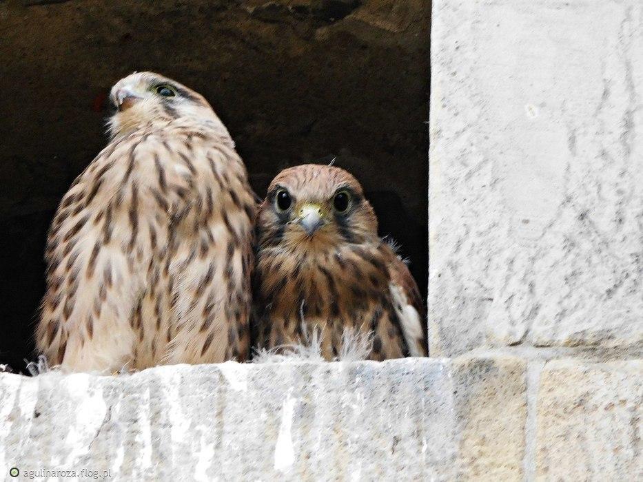 Ciekawych mieszkańców można spotkać w sanktuarium na Łysej Górze :) Kto wie kim są....?