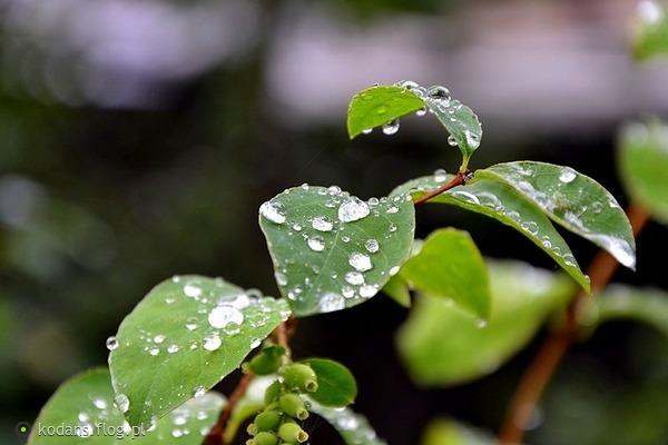 http://s24.flog.pl/media/foto_middle/12128380_najcenniejsze-zawsze-jest-to-co-odeszlo.jpg