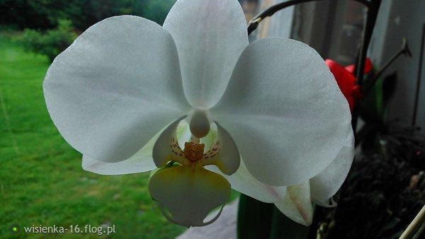 http://s24.flog.pl/media/foto_middle/12130295_agus-dziekuje-za-piekna-dedykacje-i-za-obecnosc--milego-dnia-.jpg
