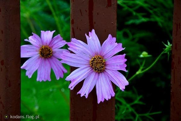 http://s24.flog.pl/media/foto_middle/12130631_-wszyscy-jestesmy-historiami-ktore-wlasnie-ktos-czyta.jpg