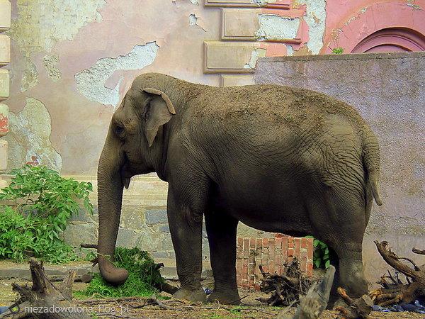 http://s24.flog.pl/media/foto_middle/12142278_zoo.jpg