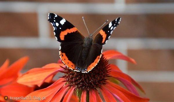 http://s24.flog.pl/media/foto_middle/12144800_dla-ciebie-moniko.jpg