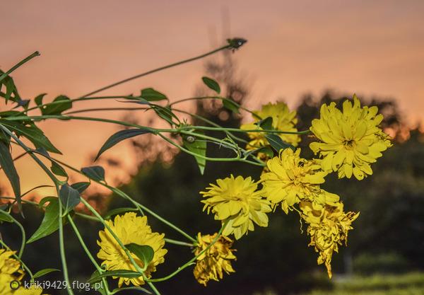 http://s24.flog.pl/media/foto_middle/12146369_czas-mija-nas--dobrego-wieczoru-drodzy-.jpg