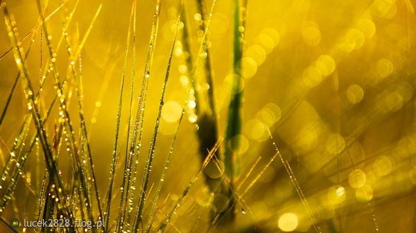 http://s24.flog.pl/media/foto_middle/12148082_wszyscy-jestesmy-jak-krople-deszczu.jpg