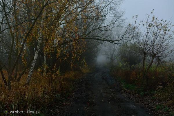 http://s24.flog.pl/media/foto_middle/12149321_jestem-wrazliwy-na-jesieni-umizgi-.jpg