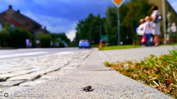 http://s24.flog.pl/media/foto_middle/12156632_na-skoczowskiej-ulicy.jpg