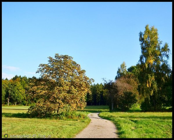 http://s24.flog.pl/media/foto_middle/12162649_schomberg.jpg