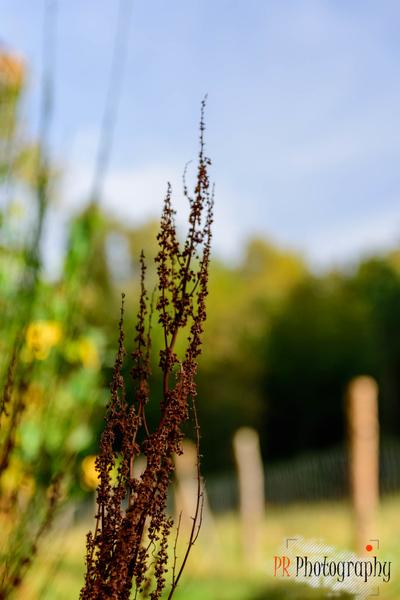 http://s24.flog.pl/media/foto_middle/12202041_jesiennie-w-lesie.jpg