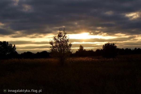 http://s24.flog.pl/media/foto_middle/12208915_w-podziekowaniu-za-dedykacje-pozdrawiam-.jpg