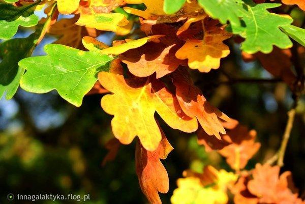 http://s24.flog.pl/media/foto_middle/12231635_z-pozdrowieniami-.jpg