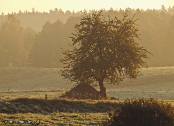 http://s24.flog.pl/media/foto_middle/12239937_jesienia-o-poranku.jpg