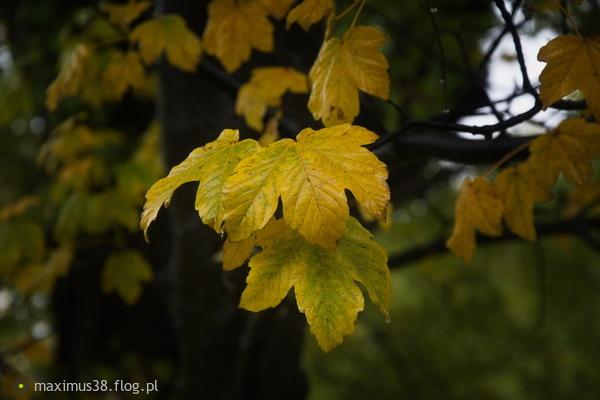 http://s24.flog.pl/media/foto_middle/12253281_pozna-jesien-w-parku.jpg