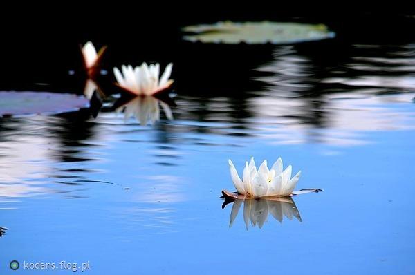 http://s24.flog.pl/media/foto_middle/12262187_niech-zycie-bedzie-takie-by-smierc-mogla-wzorowac-sie-na-pieknie-i-radosci-.jpg