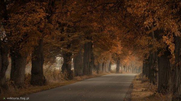 http://s24.flog.pl/media/foto_middle/12265749_aleja-wspomnien.jpg
