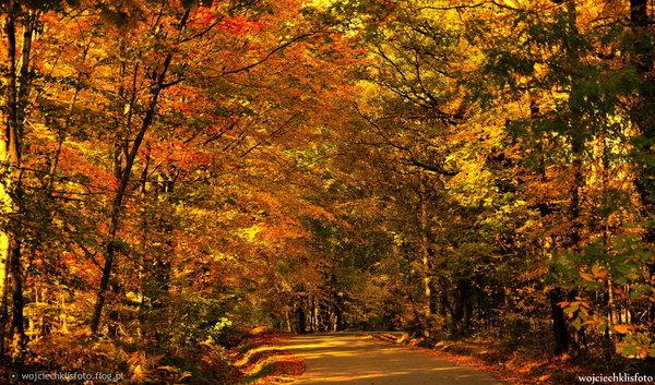 http://s24.flog.pl/media/foto_middle/12270469_-pora-roku-jaka-lubie-jesien-dlaczego-wszystko-wokol-powoli-umiera--zupelnie-tak-jak-ja-.jpg