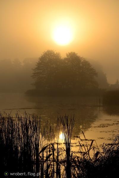 http://s24.flog.pl/media/foto_middle/12278849_w-szuwarach-pokryte-zlotem-zaranie-.jpg