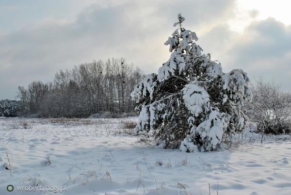 http://s24.flog.pl/media/foto_middle/12289305_nadeszla-pora-snieznych-czarow-.jpg