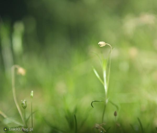 http://s24.flog.pl/media/foto_middle/12302975.jpg