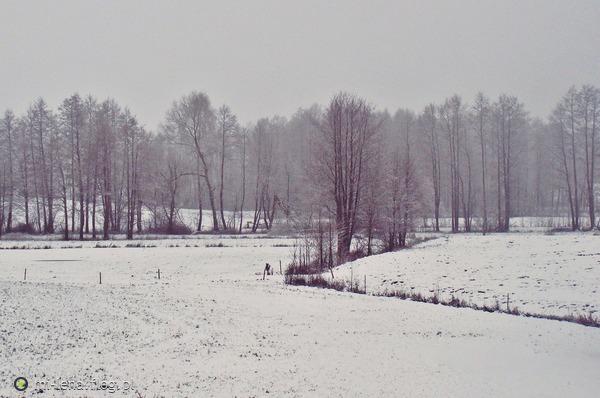 http://s24.flog.pl/media/foto_middle/12323295_zamglony-swiat-.jpg