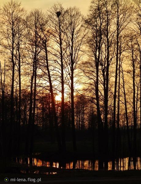 http://s24.flog.pl/media/foto_middle/12327880.jpg